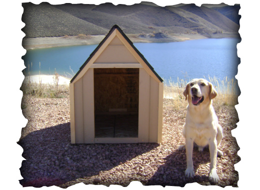 free dog house plans step by step building a dog house made easy - Step House Plans